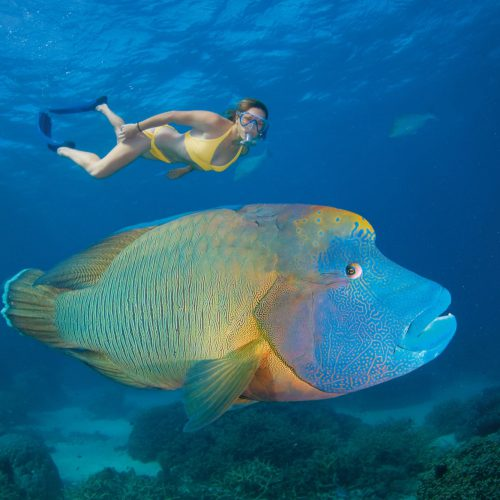 australian-great-barrier-reef-18